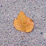 Leaf On Granite 2 - Square Art Print