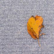 Leaf On Granite 3 Art Print