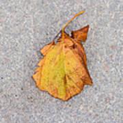 Leaf On Granite 4 - Square Art Print