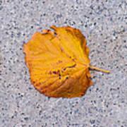 Leaf On Granite 7 - Square Art Print