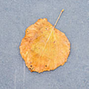 Leaf On Granite 9 - Square Art Print