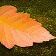 Leaf On Moss Art Print by Adam Romanowicz