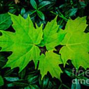 Leaf Overlay Art Print