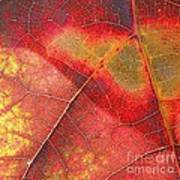 Leaf Pattern_1 Art Print