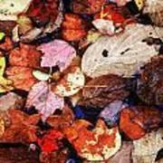Leaf Patterns 2 Art Print