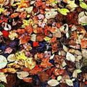 Leaf Patterns 3 Art Print