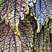 Leaf Series 15 Art Print