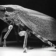 Leafhopper Print by David M. Phillips