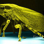 Leafhopper, Sem Art Print