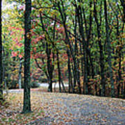 Leafy Trail Art Print