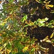 Leafy Tree Bark Image Art Print