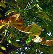 Leafy Tree Image Art Print