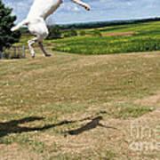Leap Higher Art Print