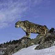 Leapard Look Out Art Print