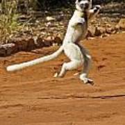 Leaping Lemur Art Print