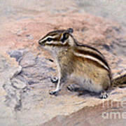 Least Chipmunk #2 Art Print