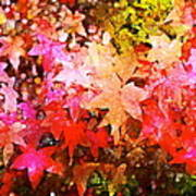 Leaves 11 Art Print