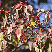 Leaves And Berries Art Print