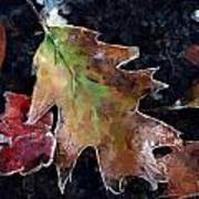Leaves And Frost Art Print