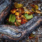 Leaves And Root Art Print
