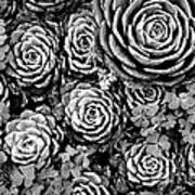 Leaves And Succulents Art Print
