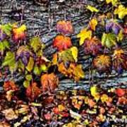 Leaves At The Levee Art Print