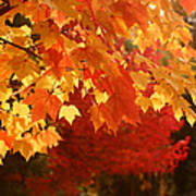 Fall Leaves In Afternoon Sun Art Print