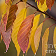 Leaves In Fall Art Print