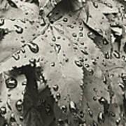 Leaves In Rain Art Print