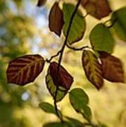 Leaves In The Breeze Art Print