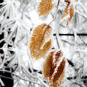 Leaves In The Frost Art Print