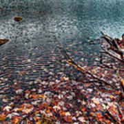Leaves In The Lake Art Print