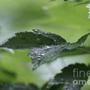 Leaves In The Rain Art Print