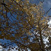 Leaves In The Sky Art Print
