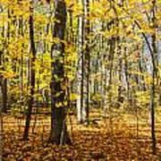 Leaves In The Woods Art Print