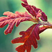 Leaves Of Red Art Print