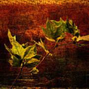 Leaves On Texture Art Print
