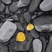 Leaves With Rocks Art Print
