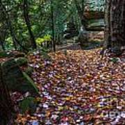 Ledges Overlook Trail 5 Art Print