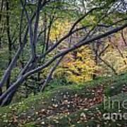 Ledges Overlook Trail 6 Art Print
