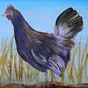 Legbar Chicken Art Print