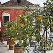 Lemon Trees On A Villa Terrace Print by George Oze