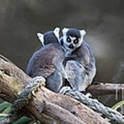 Lemur's Art Print by Shannon Rogers