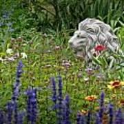 Leo In The Garden Art Print