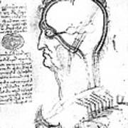 Leonardo: Brain, C1490 Art Print