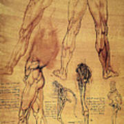Leonardo: Legs, C1508 Art Print