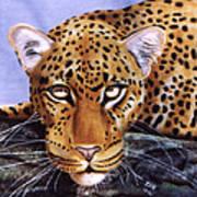 Leopard In A Tree Art Print