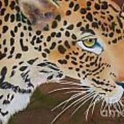 Leopard In Botswana Art Print