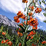 Leopard Lilies Below Lassen Peak Art Print