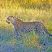 Leopard On The Prowl Art Print